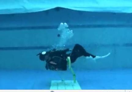 ダイビング スキル