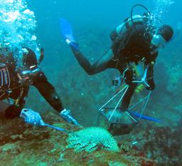 ダイビング サンゴ オニヒトデ