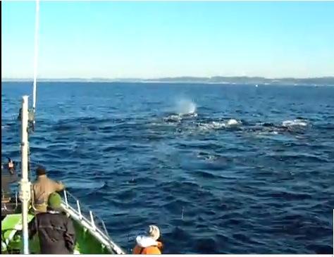 ダイビング クジラ