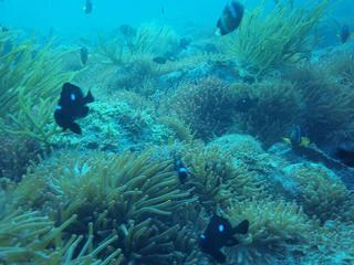 高知 沖の島 ダイビング