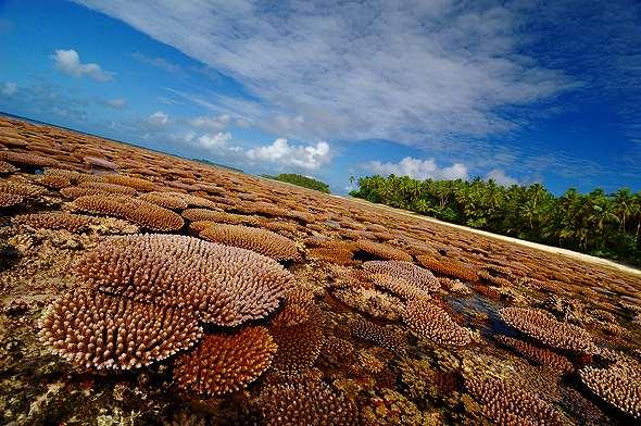 Coral, Majuro Marshall Islands
