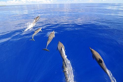 マーシャル諸島 アルノ環礁 イルカ