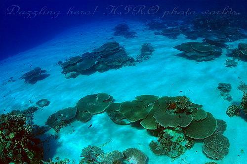 マーシャル諸島 ダイビング