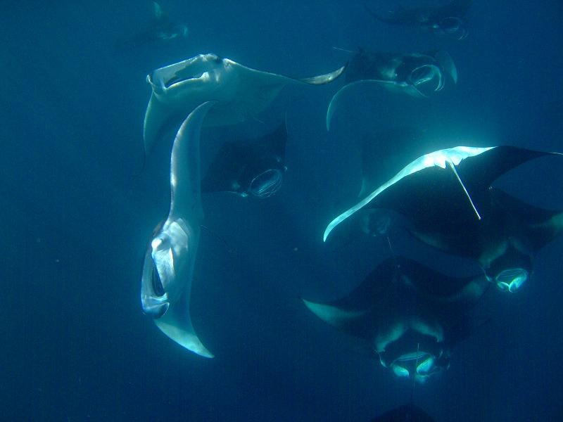 ハニファルベイ(モルディブバア環礁)
